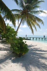 carpentras-460-200x300 dans MALDIVES